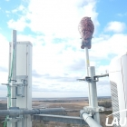 Owl on Cell Tower